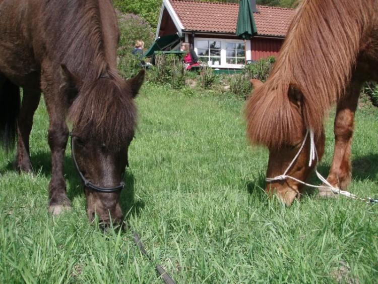 Hästarna fikar