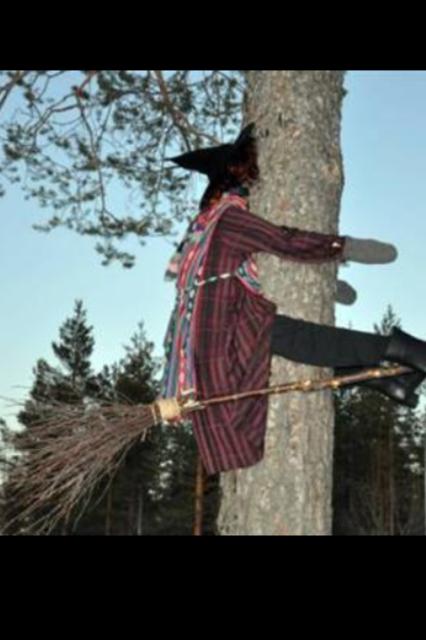 häxa in i träd