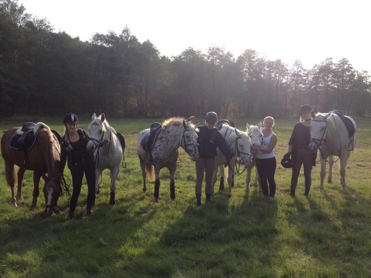 Många hästar på fikabesök