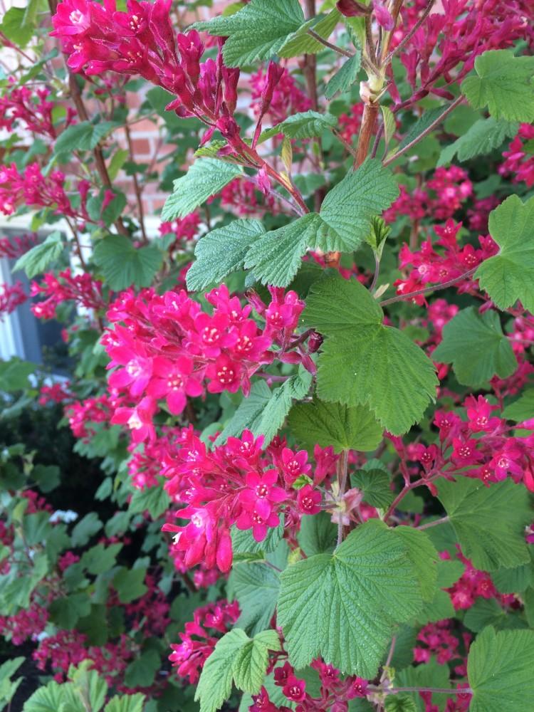 Vackra blommor på buske